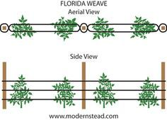 Florida Weave Diagram - A simple, inexpensive, and very efficient way to support…