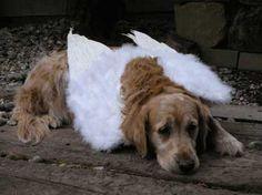 Pet Loss, Pets, Loss Of Pet, Animals And Pets