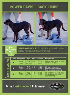 Agility training for dogs is a challenge of teaching your canine to successfully navigate an obstacle course for example! Training Plan, Dog Training Tips, Training Online, Agility Training, Potty Training, Training Schedule, Card Workout, Dog Workout, Reps And Sets