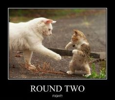 Round two...FIGHT :D