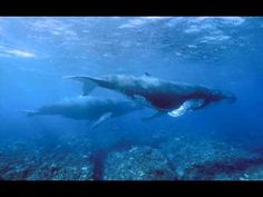 Sounds of Nature: Whales