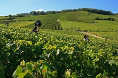 As UNESCO adds parts of Champagne and Burgundy to its World Heritage List, Vicky Leigh takes a tour of these wine-producing regions and looks at property for sale Champagne Region, Road Trip Europe, Christmas In Paris, France, Like A Local, Great Restaurants, Best Places To Eat, Alsace, The Locals