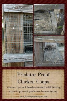 Predator Proof Your Chicken Coop @ Farming My Backyard