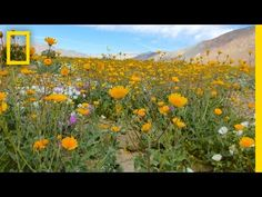 Where to See Wildflowers in the Bay Area