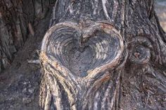 100 Years in the Making ~ tree bark heart