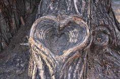 100 Years in the Making ~ tree bark heart