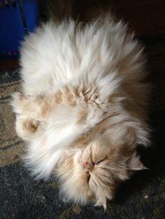Big ball of fur....