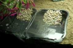 Provide your hermit crab with freshwater and saltwater pools for drinking and bathing! Find a small plastic painter's tray and cut off the back of the tray. Scratch the ramp area of the tray with a Hermit Crab Homes, Hermit Crab Tank, Hermit Crabs, Hermit Crab Habitat, Crabby Patties, Turtle Habitat, Class Pet, Crab Shack, Saltwater Aquarium