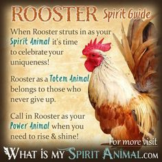 Rooster Spirit Guide