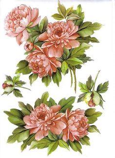 gifs fleurs - Page 2 Decoupage Vintage, Decoupage Paper, Vintage Diy, Vintage Images, Botanical Flowers, Botanical Art, Botanical Illustration, Art Floral, Vintage Flowers