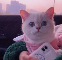 Cute Baby Cats, Cute Cats And Dogs, Cute Little Animals, Kittens Cutest, Cat Profile, Cute Cat Wallpaper, Cat Icon, Cat Aesthetic, Cat Memes