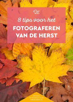 8 tips voor het fotograferen van de herfst #fotografietips #herfstfotografie #natuurfotografie #fototips