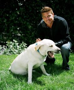David Boreanaz Photos