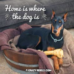 Home is where the dog is. #quotes #dogs #doberman #love