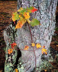 #WonderWatch 2015-153 Express Yourself #EverydayEncounters #ArtfulNature #AtYourFeet #PA #UpperDelawareRiverRegion #SandyLongPhotos #nature #naturephotography #fall #FallFoliage #autumn #GlimpsesOfFall #trees #zen