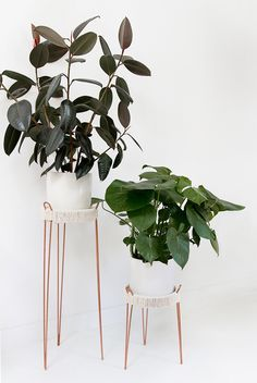 DIY copper plant stands (smitten studio) My copper infatuation is still in full swing so when I was looking for plant stands for the studio and came up empty handed, I took matters into my own hands. Get the full DIY after the jump… I foun