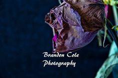 http://brandoncolemarmot.wix.com/brandoncolephoto