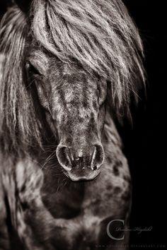 Spotted Pony by Colourize.deviantart.com on @deviantART