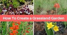 Get a step-by-step recipe for doing the plant layout of a grassland garden. This is a real life planting recipe that we've used with success in many grassland gardens. Use it as is or adapt it to your liking.
