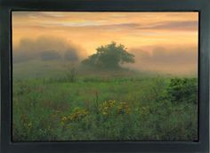 scott prior art | Scott Prior| Apple Tree at Sunrise, 2004, oil on panel | Nancy Hoffman ...