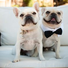 dog ring bearer, dog wedding tuxedo // Viera Photographics // Savvy Deets Bridal