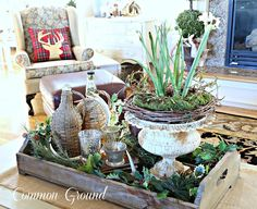 common ground : Christmas Tour 2015 Paperwhites in grapevine and distressed urn, old tray contains decorations of various textures.