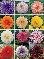 dahlias- oh yes...going to grow some this year!