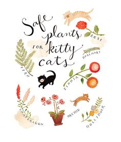 safe plants for kitty cats via The Dainty Squid - this isnt a DIY, more a note to self