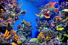 Photo taken in the Acquarium de Barcelona--amazing colors--Photo by Santi Rodriguez