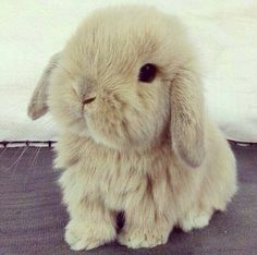 Find images and videos about cute, animal and bunny on We Heart It - the app to get lost in what you love. Super Cute Animals, Cute Little Animals, Cute Funny Animals, Fluffy Animals, Animals And Pets, Cute Puppies, Cute Dogs, Cute Baby Bunnies, Tiny Bunny