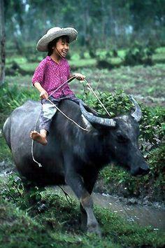 le buffle est un animal domestique pour labourer les rizières , ou tirer les charrettes .
