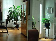 استخدام النباتات في الديكور المنزلي | سوبرماما
