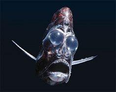 6 Most Bizarre Deep Sea Creatures