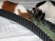Hay holder during floortime!