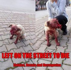 Yup, this is fu**ing reality (mind my french). Would you have the heart to stop and help this poor animal? <<<< WHO THE HELL WOULD DO THIS?!!!?! IT LOOKS LIKE HIS ENTIRE EFFING MUZZLE IS GONE!!! Animal Abusers should be punished in the same way they abuse their animals.