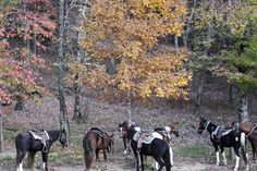 Guided Rides and Camping - Triple R Ranch