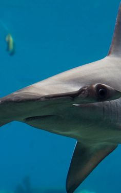 Our top picks for where to go hammerhead diving.