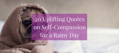 Having a rainy day? Here are 20 uplifting quotes on self-compassion to inspire deeper self-acceptance and internal peace. Compassion Quotes, Self Compassion, Robert Holden, Self Quotes, Self Acceptance, Human Condition, Uplifting Quotes, Self Improvement, Inspire Me