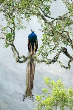 Wildlife of Sri Lanka https://www.exoticvoyages.com/wildlife-sri-lanka/?utm_source=Pin&utm_medium=organic&utm_campaign=SM