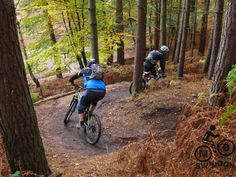 Mountain Bike trail in Cannock Chase. Great day for all levels of rider