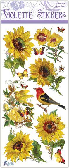 C59-Sunflowers
