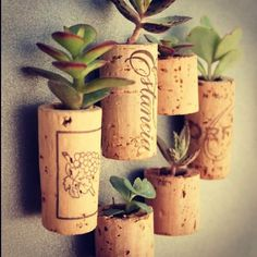 Recycle your cork tops - wall mounted mini plants @_thecoolhunter_- #webstagram