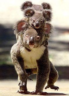 """""""Crías de animales"""" LEA UN INTERESANTE ARTÍCULO SOBRE ESTE TEMA EN EL SIGUIENTE ENLACE: http://wol.jw.org/es/wol/d/r4/lp-s/102001045 - jw.org/es """"Baby animals"""" YOU ARE INVITED TO READ AN INTERESTING ARTICLE ABOUT THIS TOPIC IN THE FOLLOWING LINK: http://wol.jw.org/en/wol/d/r1/lp-e/102001045 - jw.org/en"""