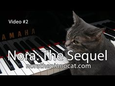 Nora The Piano Cat: The Sequel - Better than the original! - YouTube