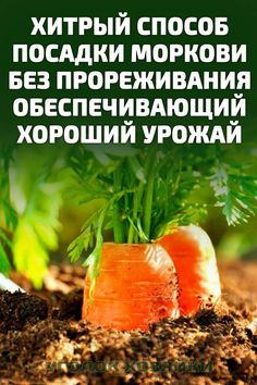 Fruit, Soda, Plants, Gardens, Beverage, Soft Drink, Sodas, Plant, Planets