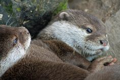 Otter Looks Especially Cuddly - April 10, 2011