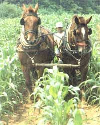 This article discusses the benefits and drawbacks of farming with horses, including comments from farmers with real-world experience, different varieties of draft horses, and ideal size farms for draft horses.