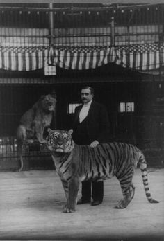 "[Heinrich Mehrmann with tiger and lion], ""Hagenbeck's Trained Animals."" cabinet card photograph by Napoleon Sarony. Old Circus, Circus Acts, Night Circus, Vintage Circus Photos, Circus Pictures, Water For Elephants, Circus Performers, Big Top, Sideshow"