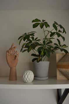 HAY wooden hand + luminous ball from TIGER + HAY Flower Pot Room Of One's Own, Flower Pots, Flowers, Wooden Hand, Planter Pots, Decor, Flower Vases, Plant Pots, Decoration