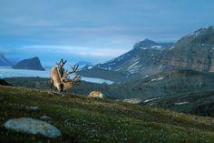 La faune du pays des fjords